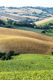 Marches (Italy): summer landscape Royalty Free Stock Photo