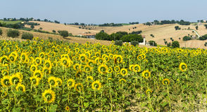 Marches (Italy): summer landscape Stock Photo
