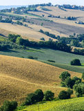 Marches (Italy): summer landscape Stock Images