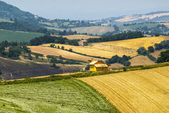 Marches Landscape. Marches (Italy) - Landscape at summer between Sassoferrato and Arcevia Royalty Free Stock Images