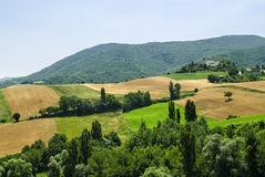 Marches Landscape. Marches (Italy) - Landscape at summer between Sassoferrato and Arcevia Royalty Free Stock Image