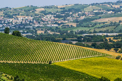 Marches Landscape. Marches (Italy) - Landscape at summer near Jesi Stock Photos