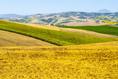 Marches Landscape Royalty Free Stock Photography