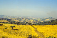 Marches landscape. Marches (Italy) - Landscape at summer in a sunny day Stock Images