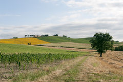 Marches - Landscape at summer, farm Stock Images