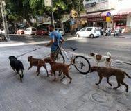 Marcheur de chien, Tel Aviv, Israël photo stock