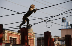 Marcheur de Tightrope photo libre de droits