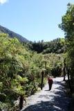 Marcheur sur le sentier piéton par des fougères d'arbre, Nouvelle-Zélande Photos libres de droits