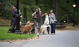 Marcheurs de crabot de début de la matinée dans Central Park Image libre de droits