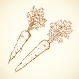 marchew rysuje tła trawy kwiecistego wektora ilustracja wektor