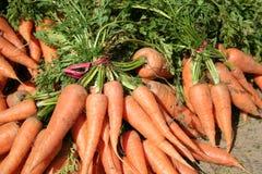 marchew wiązek organicznych Obraz Royalty Free