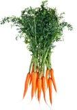 marchewki świeże Fotografia Royalty Free