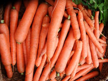 marchewki organicznie Obraz Royalty Free