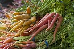 marchewki ukradziony świeży Fotografia Royalty Free