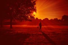 Marchez à l'air frais en parc Jeu de fille avec son chien dans l'allée de parc Photo libre de droits