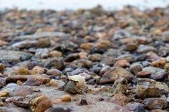 Marchez en crabe entre les pierres avec l'océan à l'arrière-plan Photos stock