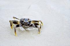 Marchez en crabe sur la plage en île de Samed, Thaïlande Image libre de droits