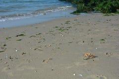 Marchez en crabe sur la plage sablonneuse avec des vagues et des roches photo libre de droits