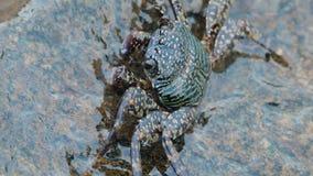 Marchez en crabe sur un stone clips vidéos