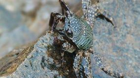 Marchez en crabe sur un stone banque de vidéos