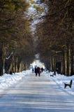 Marchez en parc dans un jour d'hiver Image stock