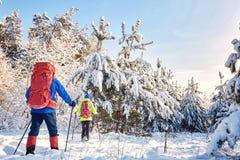 Marchez par la forêt d'hiver avec un sac à dos et une tente Image libre de droits
