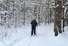 Marchez pour skier dans les bois ou le parc Image libre de droits