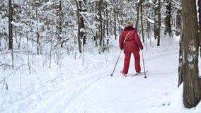 Marchez pour skier dans les bois ou le parc Photographie stock libre de droits