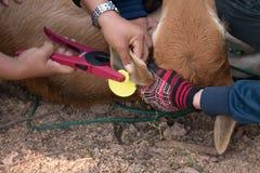 Marchi auricolari degli agricoltori di plastica Immagini Stock