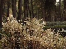 Marchitado y seque las hojas con la profundidad del campo en el ` de Parque México del ` Imagenes de archivo
