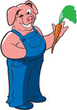 marchwiana gospodarstwa średniorolna świnia Obraz Royalty Free