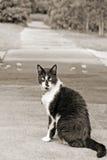 marciapiede del gatto Immagini Stock