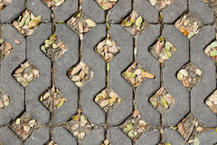 Marciapiede del mattone con le foglie Fotografia Stock