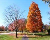 Marciapiede di sobborgo in autunno, fondo del cielo blu fotografia stock