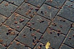 Marciapiede dirtied dagli escrementi animali dell'albero fotografie stock