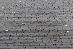 Marciapiede invertito che pavimenta con le foglie di acero gialle cadute Fotografia Stock Libera da Diritti