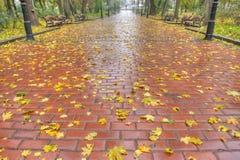 Marciapiede pavimentato con il fogliame di autunno Fotografie Stock Libere da Diritti