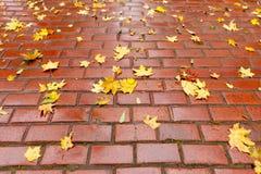 Marciapiede pavimentato con il fogliame di autunno Fotografia Stock Libera da Diritti