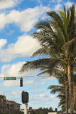 A palm tree and street sign Marcinski in Florida. Palm trees and a street sign in Juno Beach, Florida Royalty Free Stock Photos