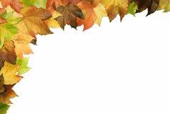 Marco 02 de las hojas Fotografía de archivo