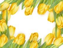 Marco aislado del tulipán EPS 10 Foto de archivo libre de regalías
