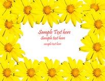 Marco amarillo de la flor Fotos de archivo