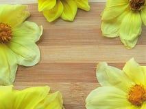 Marco amarillo de la flor de la dalia en fondo de madera Imagenes de archivo