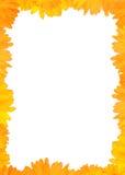 Marco amarillo del Gerbera Imagenes de archivo