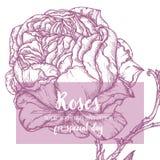 Marco azul de Rose imágenes de archivo libres de regalías