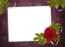 Marco blanco con color de rosa y las cintas Fotografía de archivo