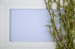 Marco blanco con las ramas del sauce verde en un fondo azul Espacio de la copia en el centro para su texto fotos de archivo