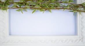 Marco blanco con las ramas verdes del sauce en un fondo blanco Espacio de la copia en el centro para su texto imagenes de archivo