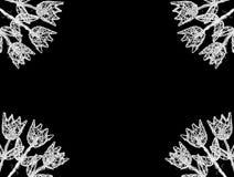 Marco blanco de los tulipanes imagenes de archivo