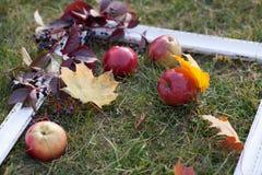 Marco blanco en la hierba con las manzanas, las uvas y las hojas Imágenes de archivo libres de regalías